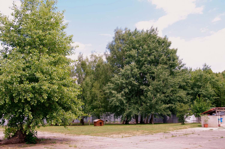 aussenflaeche-tierheim